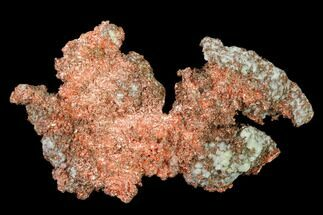 Copper - Fossils For Sale - #136671