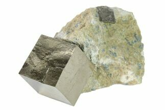 Pyrite - Fossils For Sale - #136707