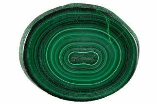 "Buy 2"" Polished Malachite Stalactite Slice - Congo - #137056"
