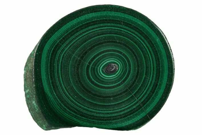 "1.45"" Polished Malachite Stalactite Slice - Congo"