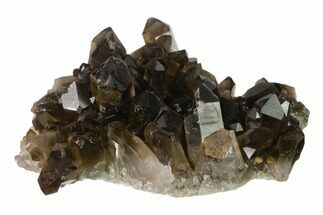 "3.3"" Dark Smoky Quartz Crystal Cluster - Brazil For Sale, #134948"