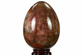 "Buy 4"" Colorful, Polished Petrified Wood ""Egg"" - Triassic - #133909"