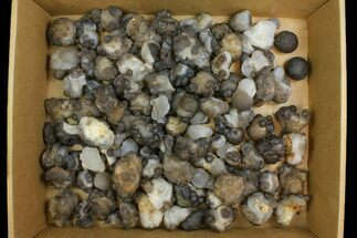 "Wholesale Lot: 1.3 to 3"" Natural Chalcedony Nodules - 100 Pieces For Sale, #137960"