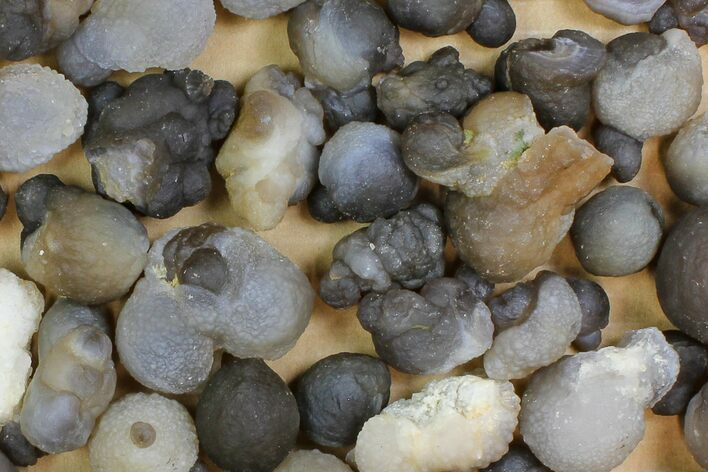 "Wholesale Lot: 1 to 1.7"" Natural Chalcedony Nodules - 65 Pieces"
