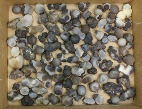 Chalcedony - Fossils For Sale - #137985
