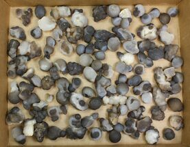 "Buy Wholesale Lot: 1 to 2.2"" Natural Chalcedony Nodules - 100 Pieces - #137986"