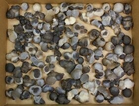 "Wholesale Lot: 1 to 2.2"" Natural Chalcedony Nodules - 100 Pieces For Sale, #137987"