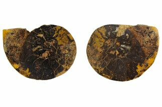 "1.7"" Iron Replaced Ammonite Fossil Pair - Morocco For Sale, #138044"