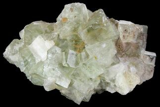 "Buy 2.6"" Light-Green, Cubic Fluorite Crystal Cluster - Morocco - #138241"