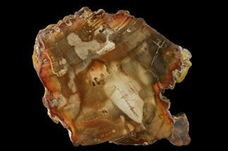 "3.9"" Petrified Wood (Araucaria) Slab - Madagascar  For Sale, #139550"