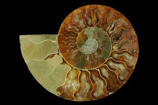 "4.3"" Agatized Ammonite Fossil (Half) - Madagascar For Sale, #139676"
