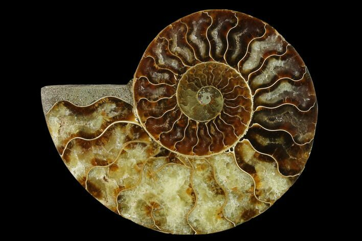 "4.55"" Agatized Ammonite Fossil (Half) - Madagascar"