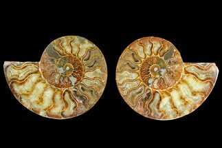 "Buy 4.9"" Agatized Ammonite Fossil (Pair) - Madagascar - #139714"