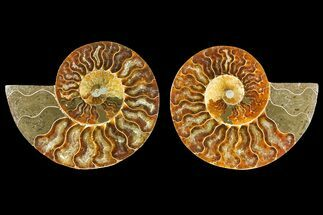"4"" Agatized Ammonite Fossil (Pair) - Madagascar For Sale, #139739"