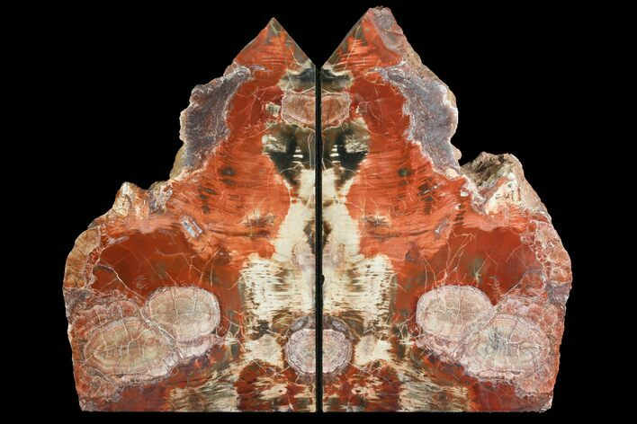 "8.95"" Tall, Petrified Wood Bookends with Fungal Rot - Arizona"