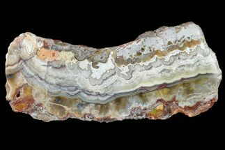 "Buy 4.2"" Polished Crazy Lace Agate Section - Mexico - #141199"