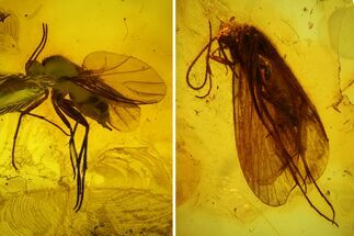 Detailed Fossil Caddisfly and Three Flies in Baltic Amber For Sale, #142214