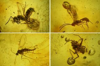 Buy Two Fossil Wasps, a Spider and Flies in Baltic Amber - #142246