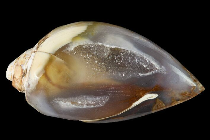 "1.4"" Chalcedony Replaced Gastropod With Druzy Quartz - India"