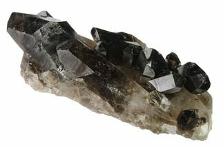 "Buy 6.8"" Dark Smoky Quartz Crystal Cluster - Brazil - #138469"