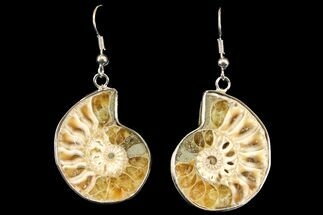 Fossil Ammonite Earrings - 110 Million Years Old For Sale, #142856