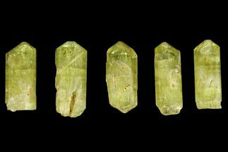 "Five Yellow Apatite Crystals (over 1"") - Morocco For Sale, #143081"
