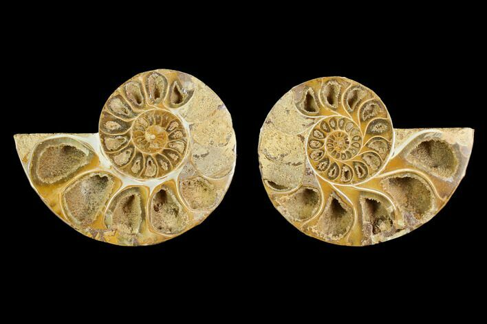 "3.7"" Cut & Polished Agatized Ammonite Fossil (Pair)- Jurassic"