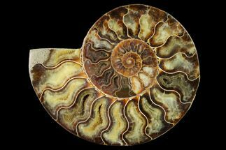 "Buy 6.45"" Agatized Ammonite Fossil (Half) - Madagascar - #144115"