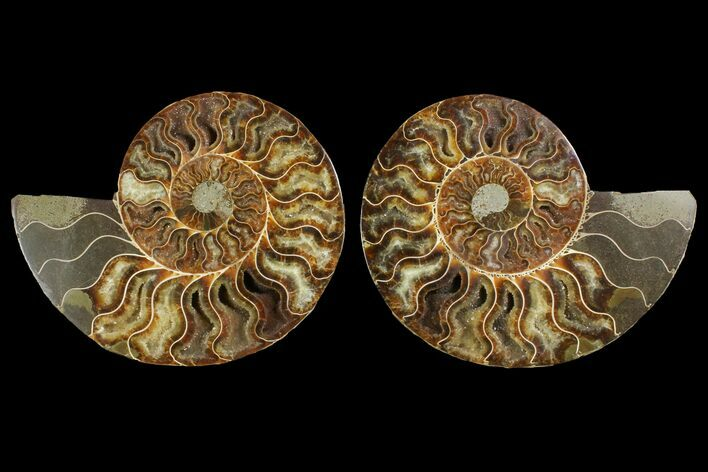 "6.3"" Agatized Ammonite Fossil (Pair) - Agatized"
