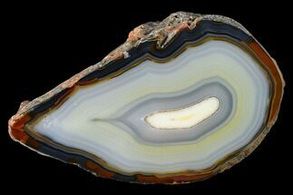 "Buy 5.1"" Polished Brazilian Agate Section - #145513"