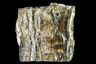 Chalcedony var. Pietersite - Fossils For Sale - #146418