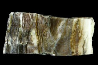 "2.7"" Chatoyant, Polished Pietersite Section - Arizona For Sale, #146432"