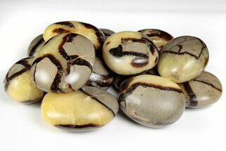 "1 1 /2"" Tumbled Septarian Pebbles  For Sale, #147362"