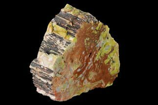 "6.7"" Colorful, Polished Petrified Wood (Araucarioxylon) - Arizona For Sale, #147899"