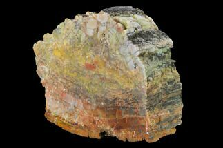 "Buy 6.4"" Colorful, Polished Petrified Wood (Araucarioxylon) - Arizona - #147913"