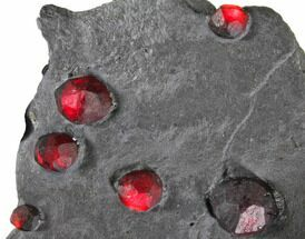 "4.6"" Plate of Ten Red Embers Garnets in Graphite - Massachusetts For Sale, #148175"