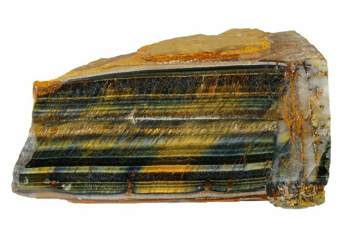 "4"" Polished Tiger's Eye Section - South Africa"