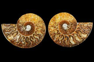 "Buy 3.55"" Agate Replaced Ammonite Fossil (Pair) - Madagascar - #145813"