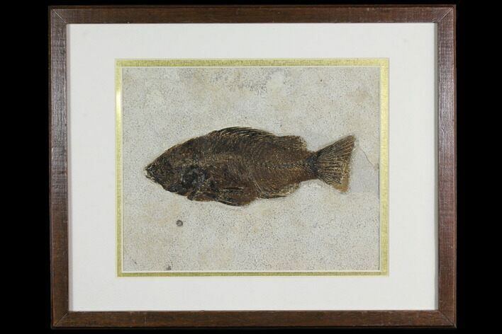 "7.7"" Framed Fossil Fish (Priscacara) - Wyoming"