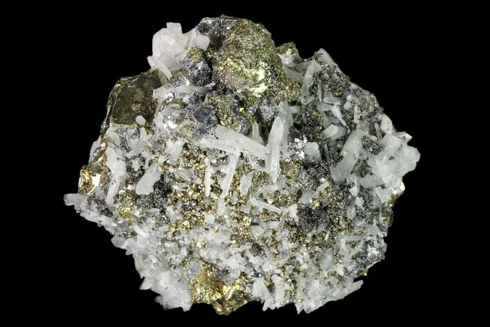 "2.1"" Chalcopyrite, Pyrite, Galena and Quartz Association - Peru"