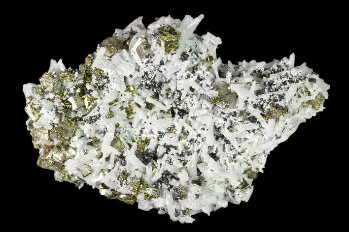 "2.8"" Chalcopyrite, Pyrite, Sphalerite and Quartz Association - Peru"