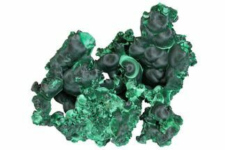 "Exceptional, 4.6"" Silky Fibrous Malachite Cluster - Congo For Sale, #150461"