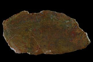 "Buy 4.1"" Polished Dinosaur Bone (Gembone) Slab - Colorado - #150517"