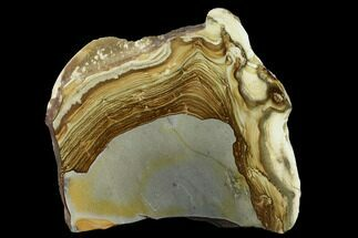 "Buy 7.95"" Polished Disaster Peak Jasper Slab - Nevada - #152683"