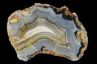 "Buy 1.9"" Polished Calandria Agate Nodule Half - Mexico - #152638"