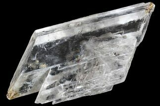 "2.3"" Selenite Crystal - Kansas For Sale, #153314"