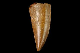 Unidentified - Fossils For Sale - #154755