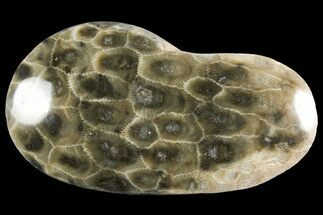 "Buy 3.5"" Polished Petoskey Stone (Fossil Coral) - Michigan - #156151"