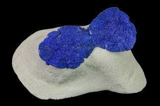 Two Vibrant, Blue Azurite Suns on Siltstone - Australia For Sale, #155645