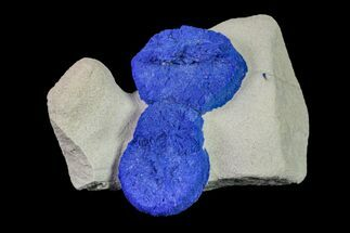 Azurite - Fossils For Sale - #155649